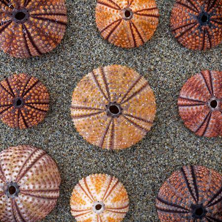 colorful sea urchin shells on wet sand beach, light vignetting