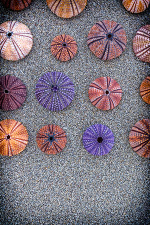 colorful sea urchins on wet sand beach, filtered image