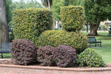 shaped: A Steam Engine Shaped Bush in Winter Park, Orlando, Florida