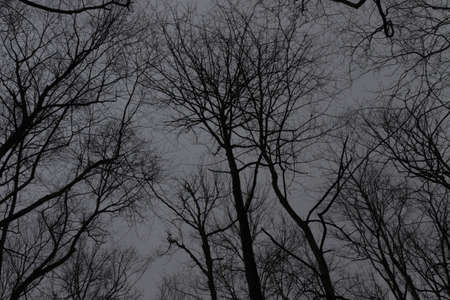 Tree Tops, Winter, Balsam Mountain, Great Smoky Mountains, North Carolina