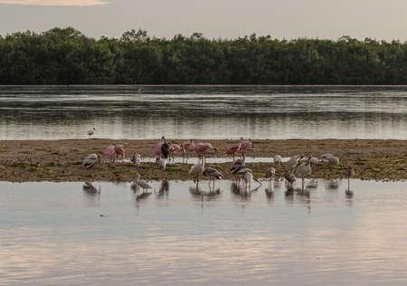 Various species of birds at Darling National Wildlife Refuge, Sanibel Island, Florida, USA