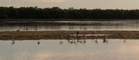 Roseate Spoonbills (Platalea ajaja), White Ibises (Eudocimus albus), Egrets, J.N. Ding Darling National Wildlife Refuge, Sanibel Island, Florida, USA Editorial