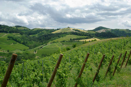 Vines and hills in Oltrepo Pavese, Italy photo