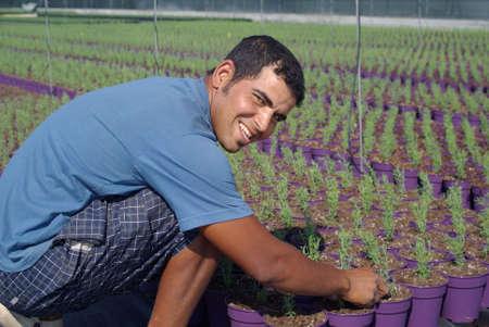Farm worker preparing new plants Stock Photo