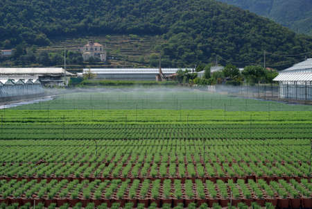 mediterranean countries: Young planting in a greenhouse