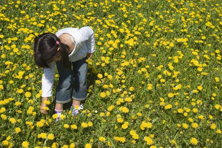 Girl picking flowers 스톡 콘텐츠