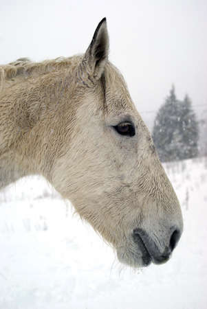 Portrait of horse  photo