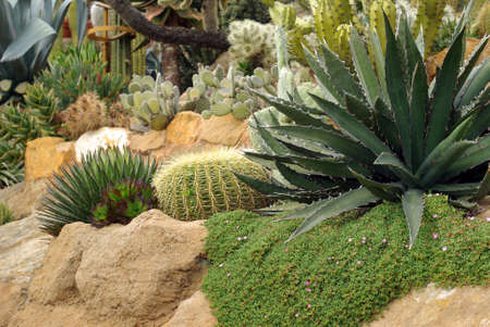 Flowerbed of the cactus 스톡 콘텐츠
