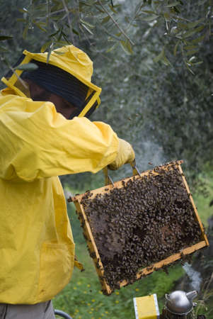 removing the risk: Beekeeper removing hive frame from box