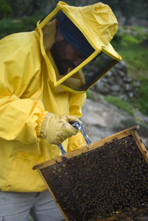 removing the risk: Beekeeper lift queen bee excluder mesh Stock Photo