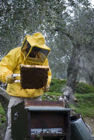 bee queen: Apicultor b�squeda de la abeja reina