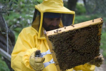 Beekeeper with honey comb photo