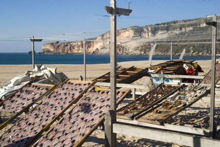Drying fish on the beach in Nazare, Portugal photo