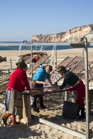 Nazare, Portugal - November 24, 2010: Portuguese women drying fish on the beach Stock Photo - 17249546