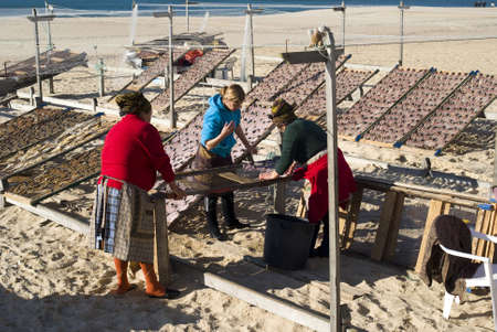 Nazare, Portugal - November 24, 2010: Portuguese women drying fish on the beach Stock Photo - 17249553