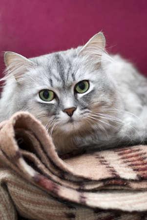 Cat Stock Photo - 17254702