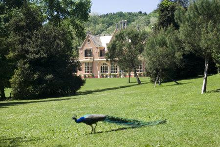 Genoa, Italy – May 14, 2012: The historical park of Villa Serra Stock Photo - 17269162