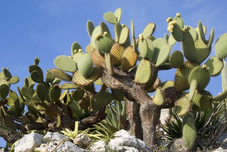 Cactus against blue sky photo