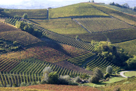 Vines and hills in Langhe. Tourist destination in Piedmont region of Italy Stock Photo - 17702134