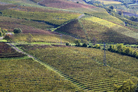 Vines and hills in Langhe. Tourist destination in Piedmont region of Italy photo