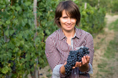 Closeup of woman in vineyard during harvest season photo