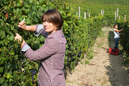 Mujer que trabaja en los viñedos