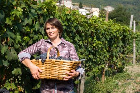 Woman in vineyard during harvest season photo