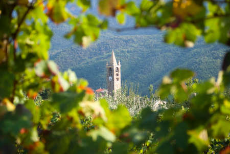 Romanesque bell tower through the vineyards photo