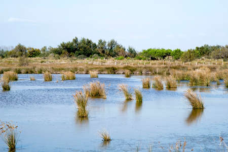 Swamp of Camargue, France photo
