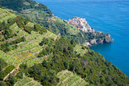 Vines and hills at National Park of Cinque Terre, Italy photo