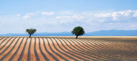 southeastern: Plateau Valensole in Provence, South-eastern France Stock Photo