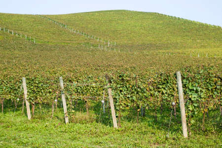 Vineyards on the hills of Langhe in Piedmont, Northern Italy photo