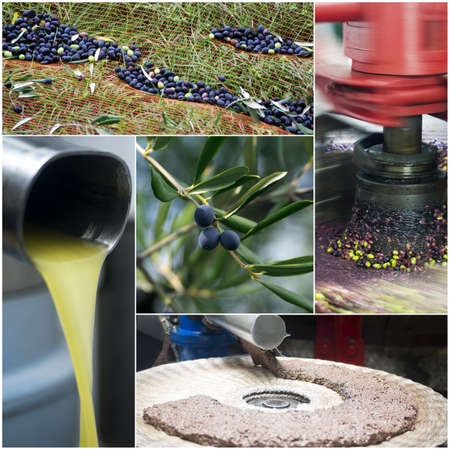 oil tool: Olive oil production