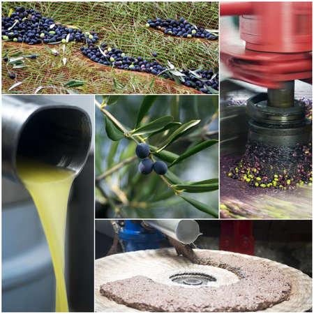 aceite de oliva: Producci�n de aceite de oliva