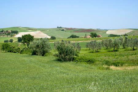 cropland: Rural landscape in Tuscany