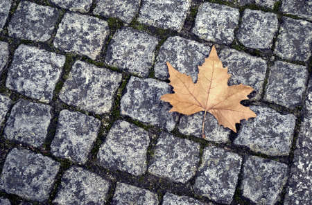 road autumnal: A  yellow maple leaf  on street Stock Photo