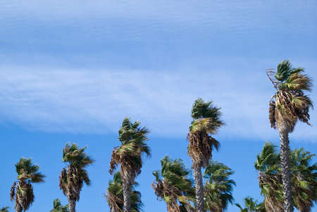 sways: Palm trees against partly cloudy sky