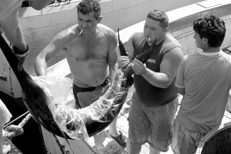 swordfish: Imperia, Italy – August 25, 2009: Fishermen unloading fresh swordfish from commercial fishing boat Editorial