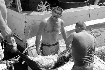 pez espada: Imperia, Italia - 25 de agosto de 2009: Los pescadores descarga de peces espada fresco del barco de pesca comercial