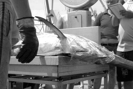 pez espada: Imperia, Italia - 25 de agosto de 2009: Pescador pesan pez espada durante la descarga en el puerto Editorial