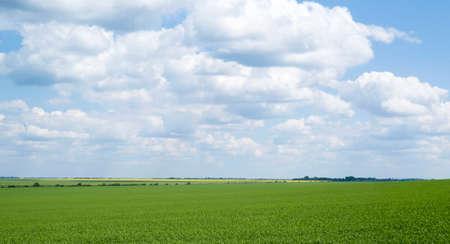 cropland: Agricultural landscape in Podolia region of Ukraine Stock Photo