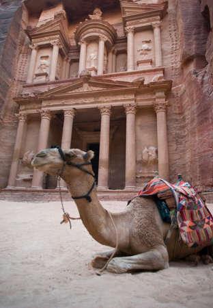 khazneh: Camel rest in front of Al Khazneh treasury ruins, Petra, Jordan