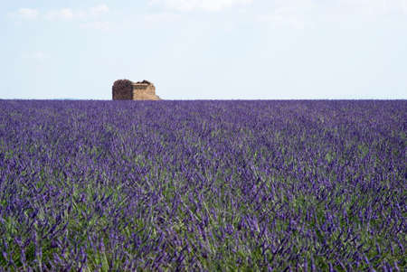 The famous lavender fields in the plateau Valensole, France Stock Photo