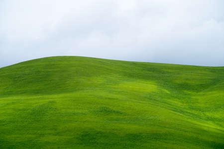 イタリア カラブリア州の丘の上の緑の麦畑
