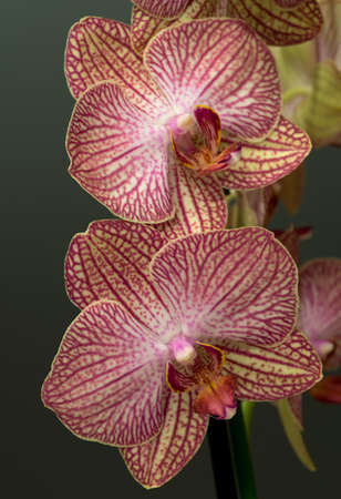 cutouts: Close up of purple and white orchid Stock Photo