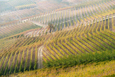 Vineyard landscape of Langhe in Piedmont region, Northern Italy Reklamní fotografie