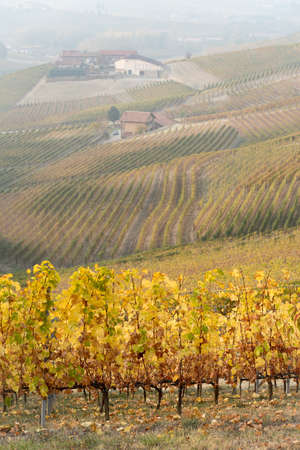 Vineyard landscape of Langhe in Piedmont region, Northern Italy Stock Photo
