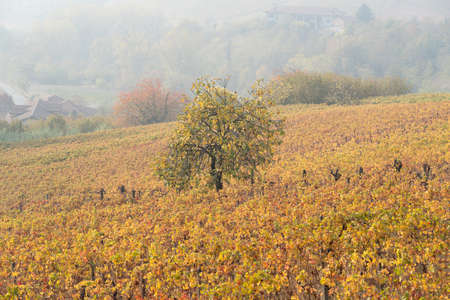 Vineyard landscape of Langhe in Piedmont region, Northern Italy Stock Photo