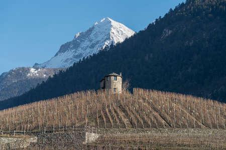Vineyard landscape in Aosta Valley region, Northern Italy