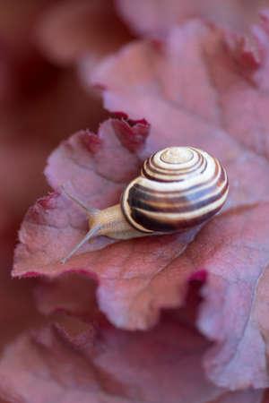 A snail on plant leaf